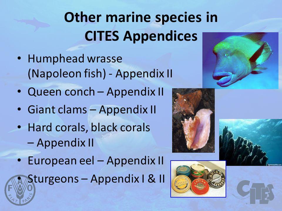 Other marine species in CITES Appendices Humphead wrasse (Napoleon fish) - Appendix II Queen conch – Appendix II Giant clams – Appendix II Hard corals, black corals – Appendix II European eel – Appendix II Sturgeons – Appendix I & II