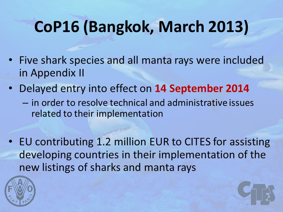 CoP16 (Bangkok, March 2013) Five shark species and all manta rays were included in Appendix II Delayed entry into effect on 14 September 2014 – in order to resolve technical and administrative issues related to their implementation EU contributing 1.2 million EUR to CITES for assisting developing countries in their implementation of the new listings of sharks and manta rays