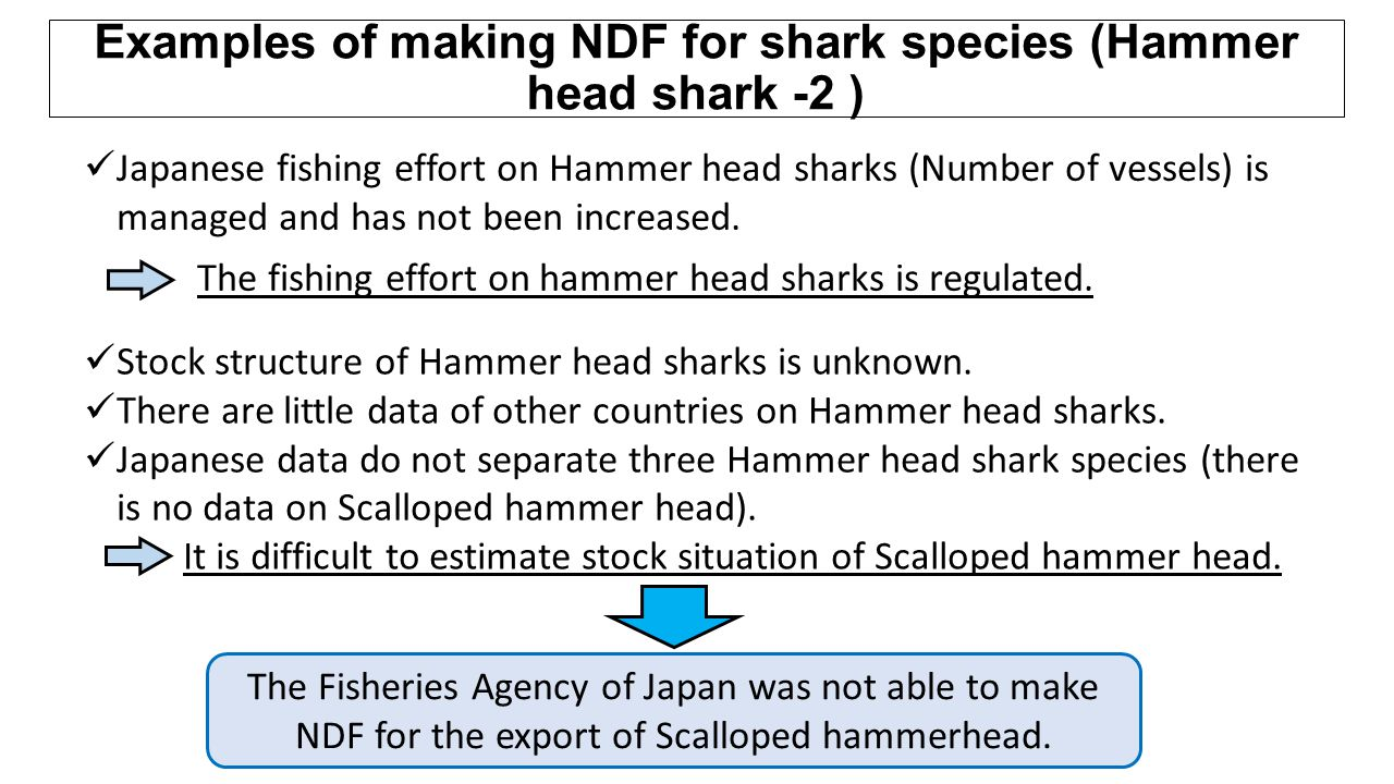 Japanese fishing effort on Hammer head sharks (Number of vessels) is managed and has not been increased. The fishing effort on hammer head sharks is r