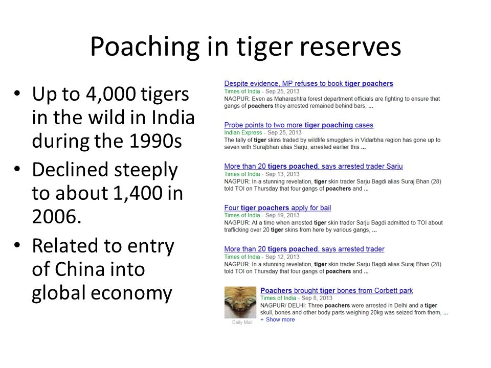 Poaching in tiger reserves Up to 4,000 tigers in the wild in India during the 1990s Declined steeply to about 1,400 in 2006.