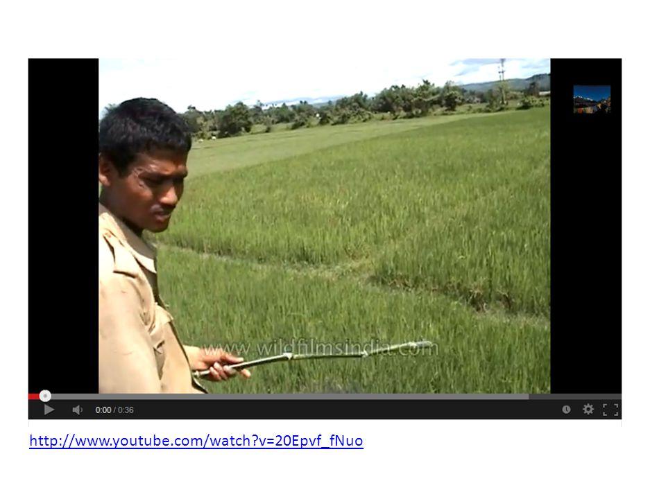 http://www.youtube.com/watch v=20Epvf_fNuo