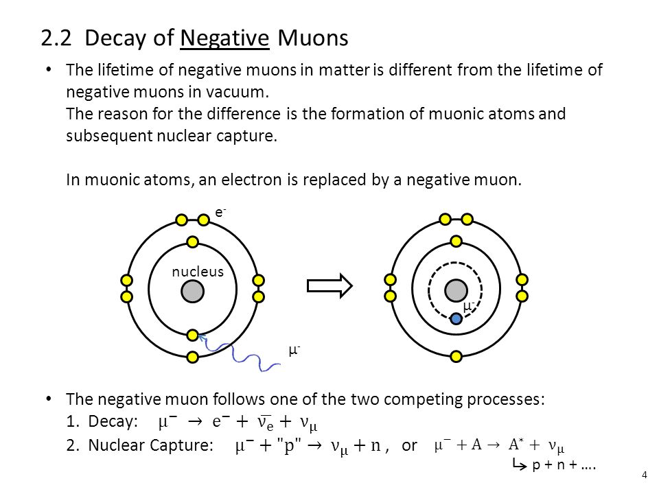 e-e- µ-µ- nucleus µ-µ- 2.2 Decay of Negative Muons 4 p + n + ….