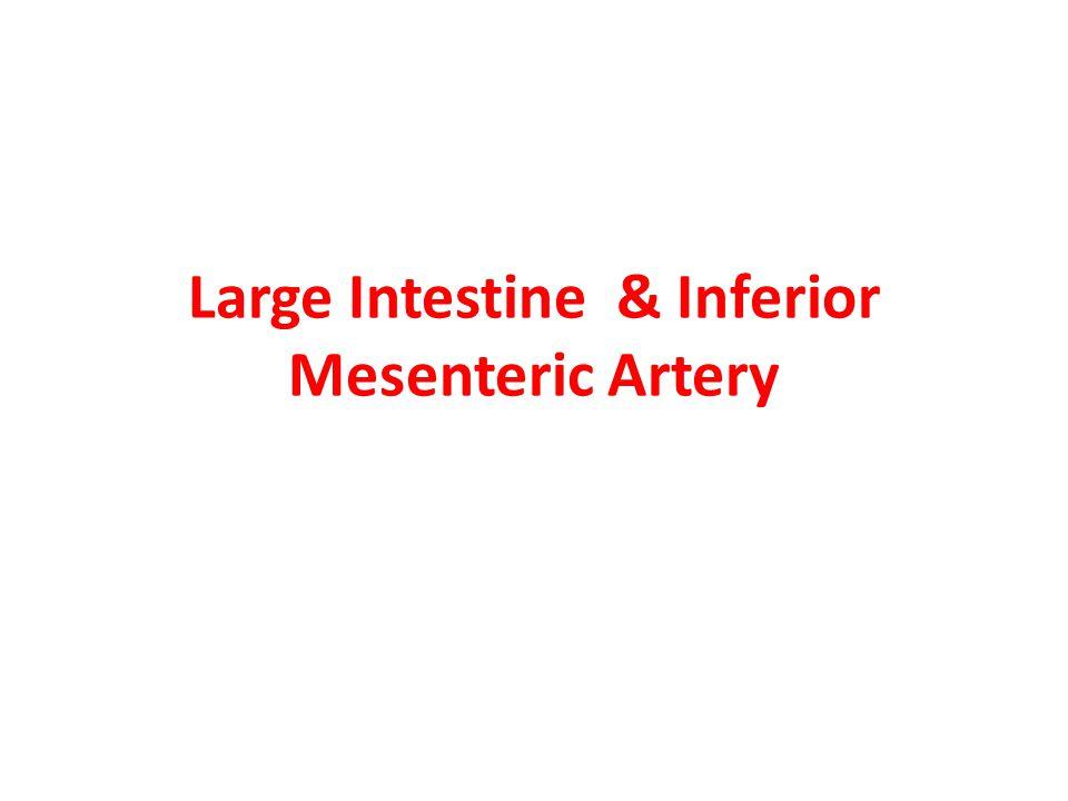Inferior mesenteric artery Branches: 1.Left colic artery 2.
