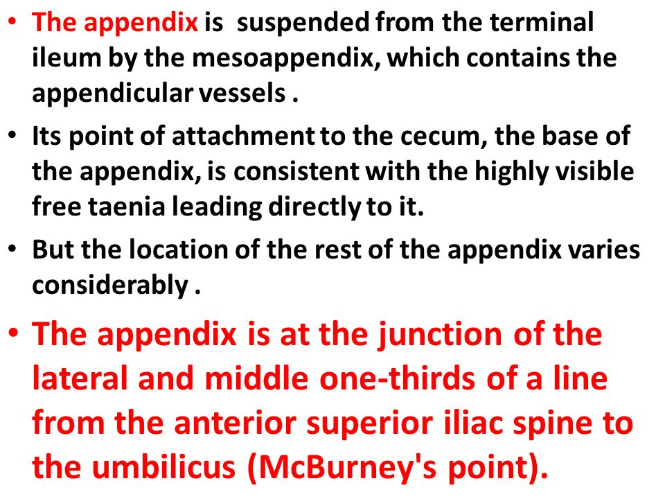 The appendix is suspended from the terminal ileum by the mesoappendix, which contains the appendicular vessels. Its point of attachment to the cecum,