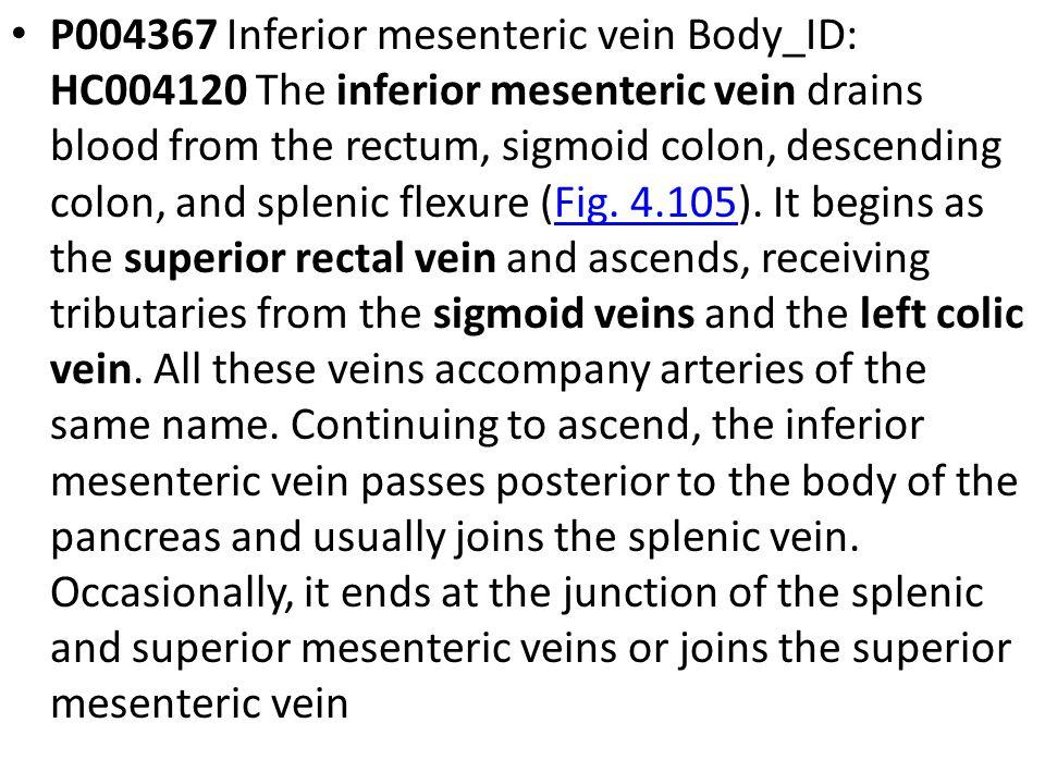 P004367 Inferior mesenteric vein Body_ID: HC004120 The inferior mesenteric vein drains blood from the rectum, sigmoid colon, descending colon, and spl