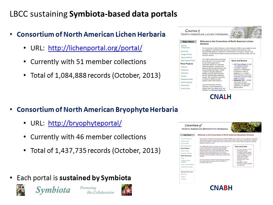 LBCC sustaining Symbiota-based data portals Consortium of North American Lichen Herbaria URL: http://lichenportal.org/portal/http://lichenportal.org/portal/ Currently with 51 member collections Total of 1,084,888 records (October, 2013) Consortium of North American Bryophyte Herbaria URL: http://bryophyteportal/http://bryophyteportal/ Currently with 46 member collections Total of 1,437,735 records (October, 2013) Each portal is sustained by Symbiota CNALH CNABH