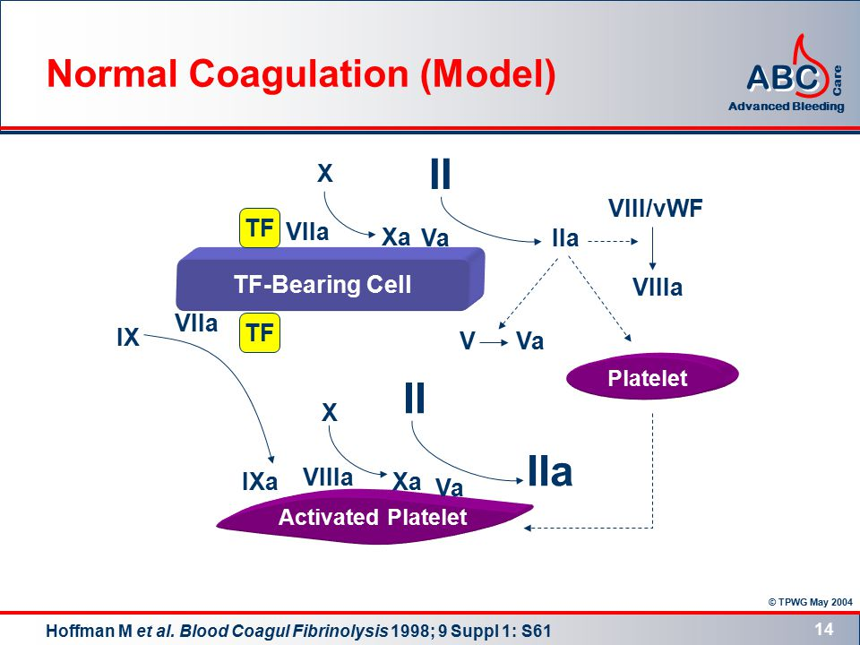 © TPWG May 2004 ABC Advanced Bleeding Care 14 TF-Bearing Cell Activated Platelet Platelet TF VIIa Xa X II IIa VVa II X IIa Xa Va IX Va VIIa IXa VIIIa VIII/vWF VIIIa Normal Coagulation (Model) Hoffman M et al.