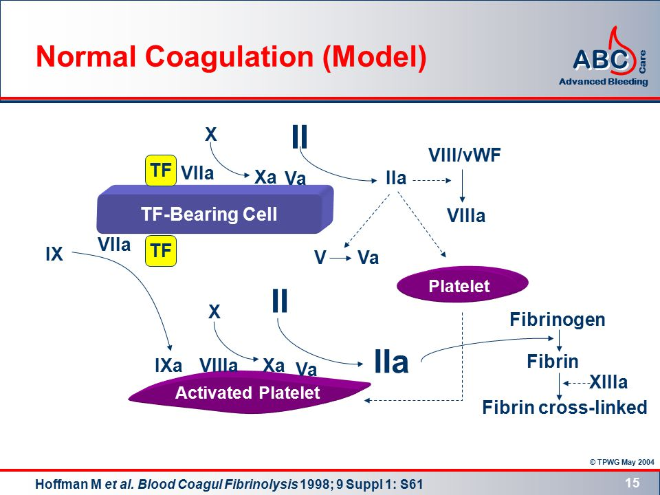 © TPWG May 2004 ABC Advanced Bleeding Care 15 TF-Bearing Cell Activated Platelet Platelet TF VIIa Xa X II IIa VVa II X IIa Xa Va IX Va VIIa IXaVIIIa VIII/vWF VIIIa Fibrinogen Fibrin Fibrin cross-linked XIIIa Normal Coagulation (Model) Hoffman M et al.