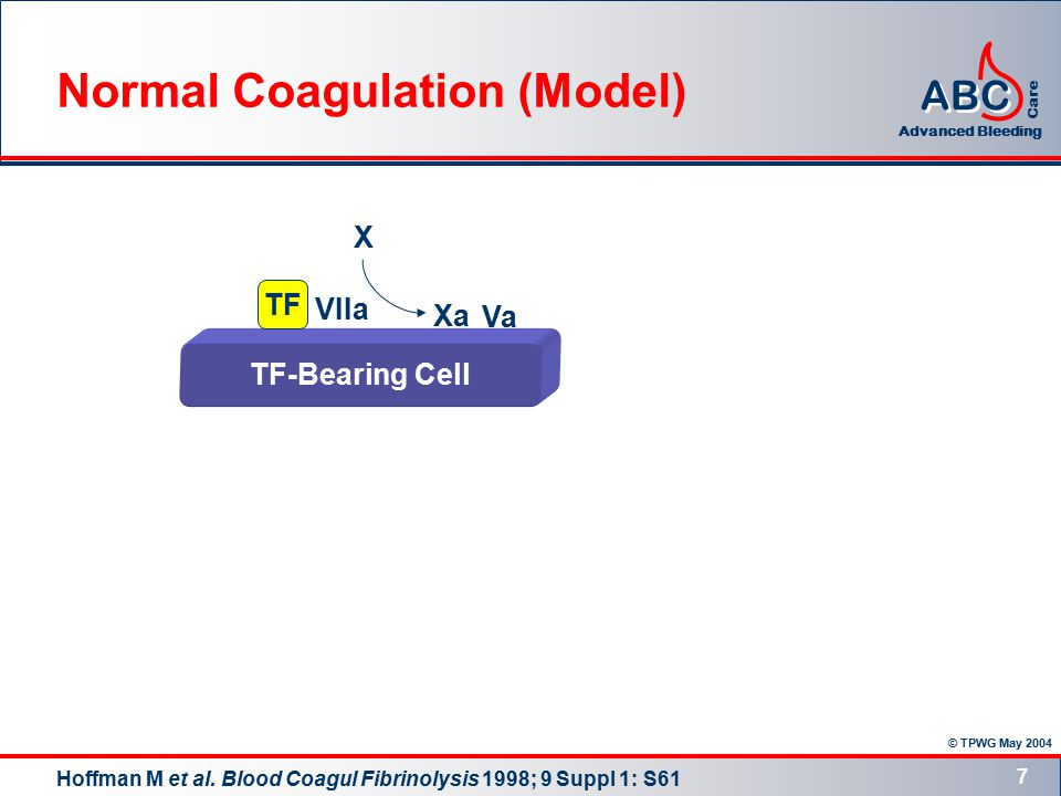 © TPWG May 2004 ABC Advanced Bleeding Care 7 TF-Bearing Cell TF VIIa Xa X Va Normal Coagulation (Model) Hoffman M et al.