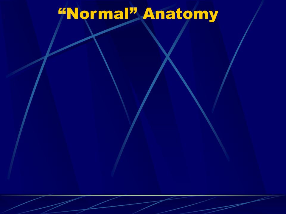"""Normal"" Anatomy"