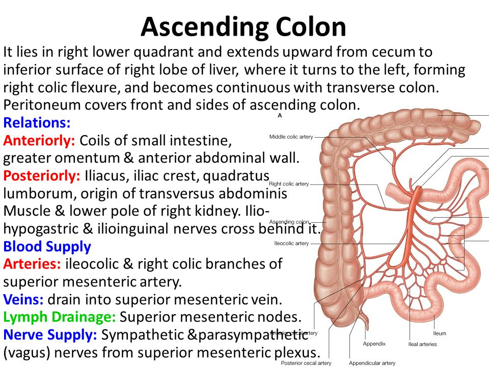 Ascending Colon It lies in right lower quadrant and extends upward from cecum to inferior surface of right lobe of liver, where it turns to the left,