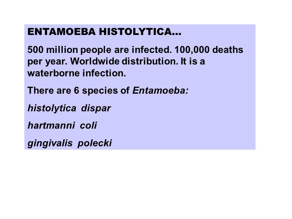 ENTAMOEBA HISTOLYTICA… 500 million people are infected.