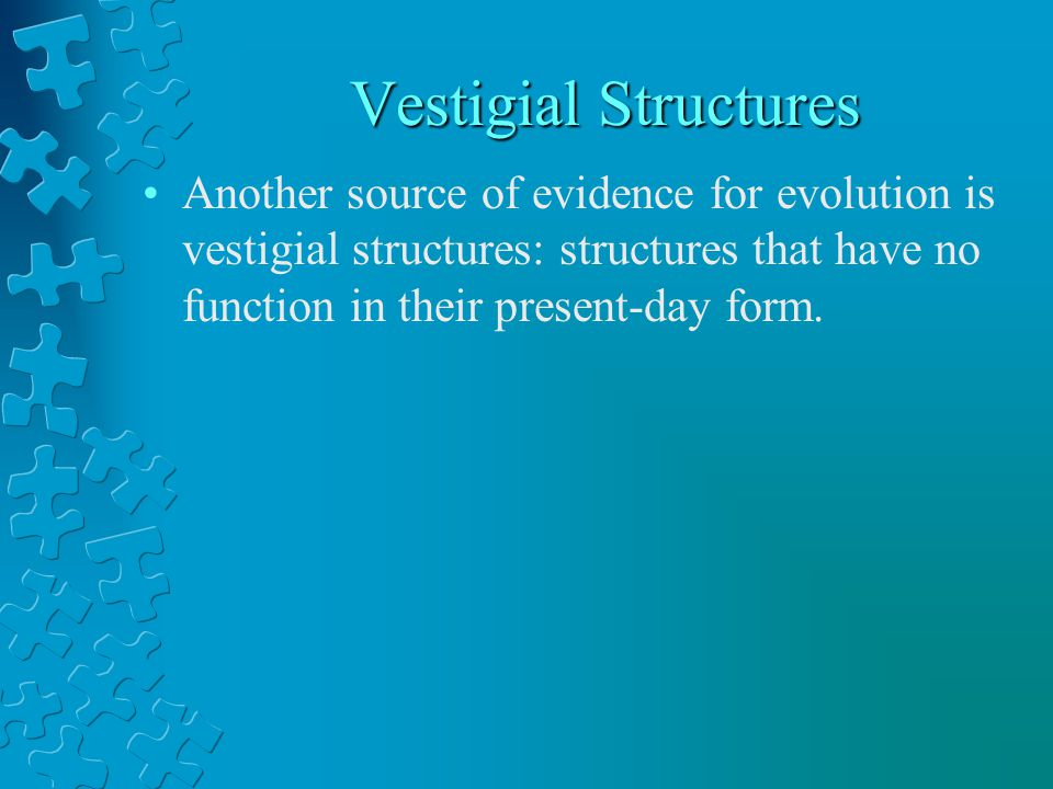 Vestigial Structures Another source of evidence for evolution is vestigial structures: structures that have no function in their present-day form.