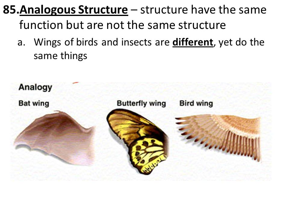 85.Analogous Structure – structure have the same function but are not the same structure a.Wings of birds and insects are different, yet do the same things