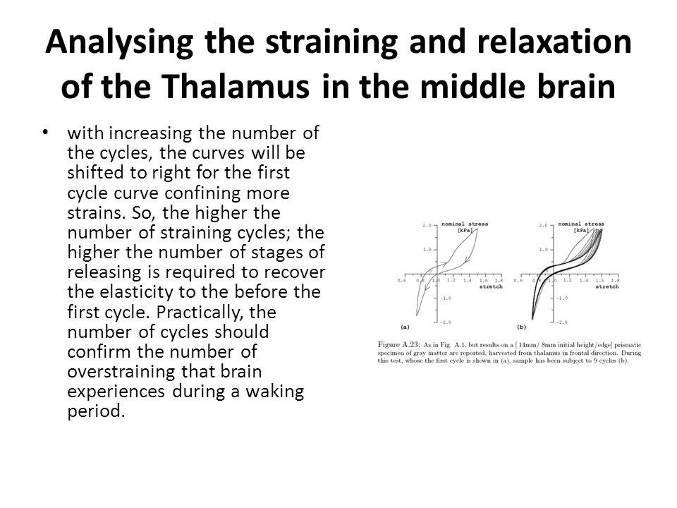 Analysing the straining and relaxation of the Thalamus in the middle brain with increasing the number of the cycles, the curves will be shifted to right for the first cycle curve confining more strains.