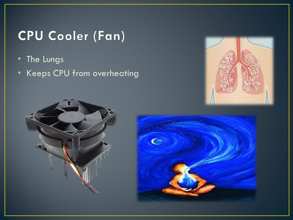 The Lungs Keeps CPU from overheating