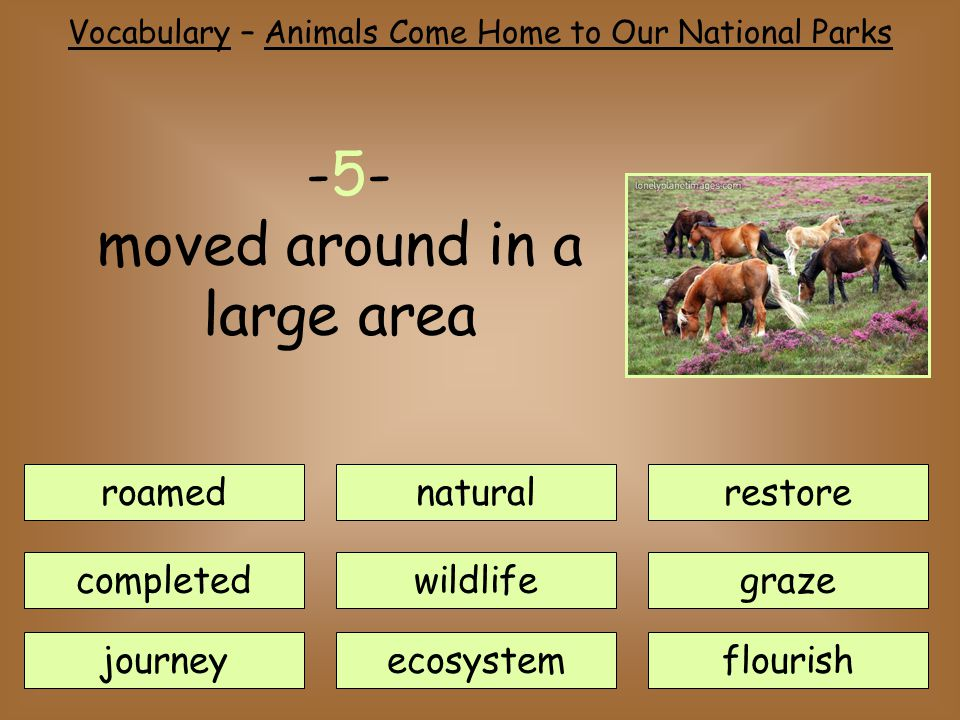 roamednatural journey completedwildlife ecosystem restore flourish graze -5- moved around in a large area