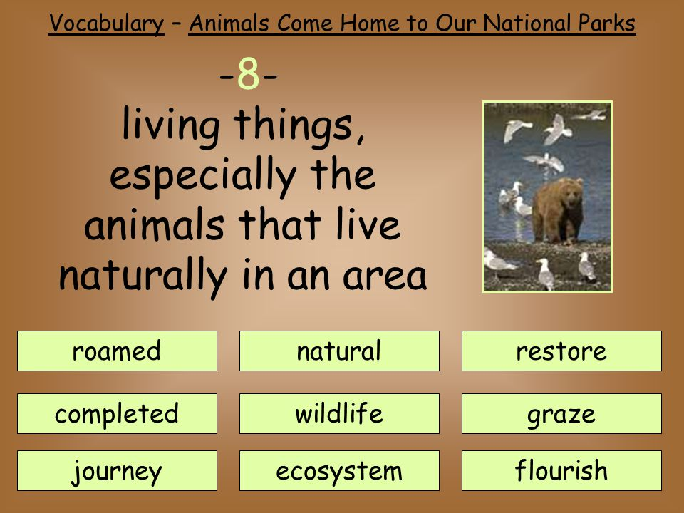 roamednatural journey completedwildlife ecosystem restore flourish graze -8- living things, especially the animals that live naturally in an area