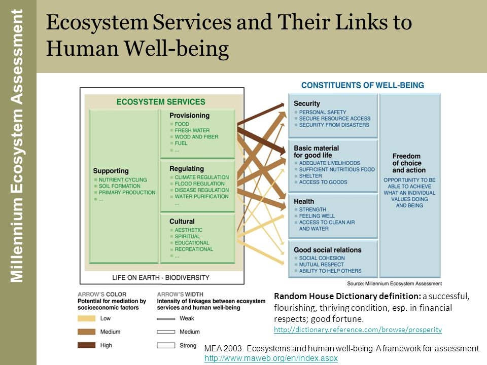 Millennium Ecosystem Assessment Ecosystem Services and Their Links to Human Well-being MEA 2003.