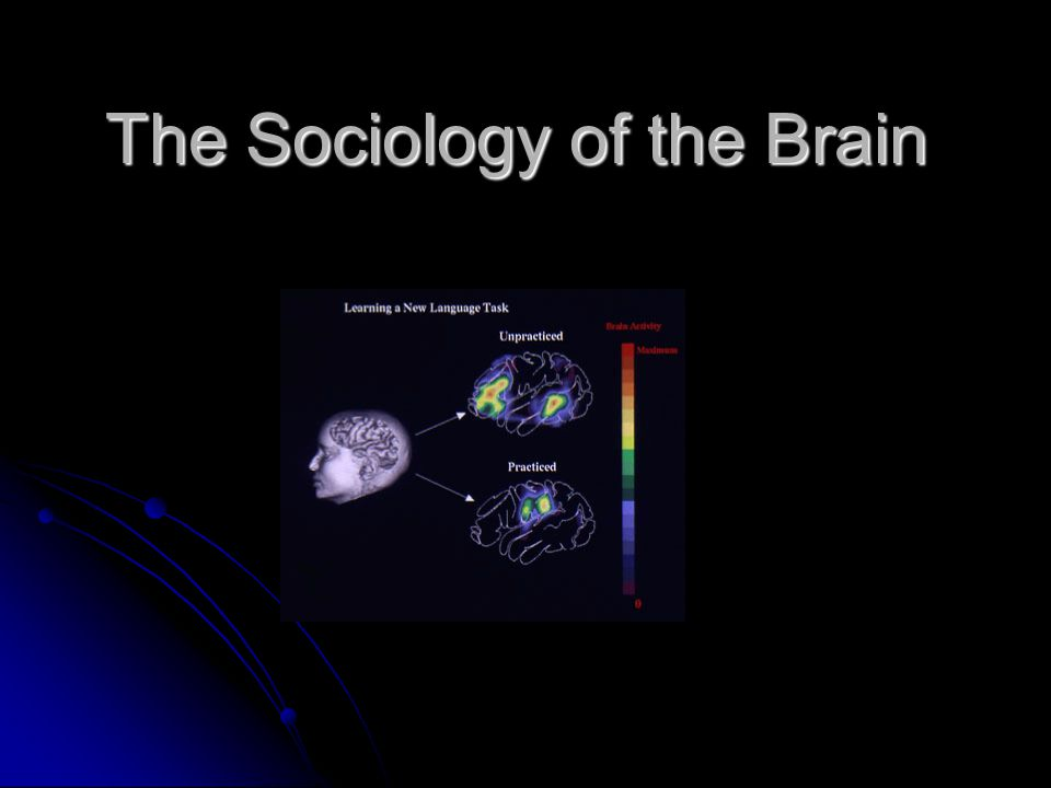 The Sociology of the Brain