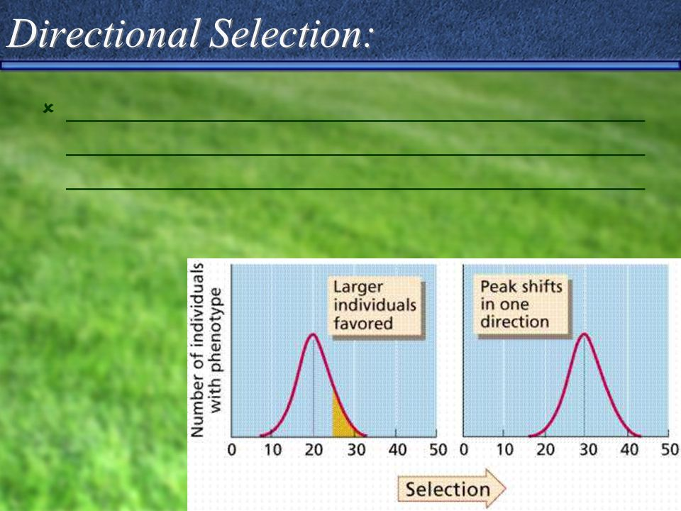 Directional Selection:  _____________________________________ _____________________________________ _____________________________________