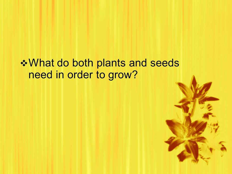  What do both plants and seeds need in order to grow?