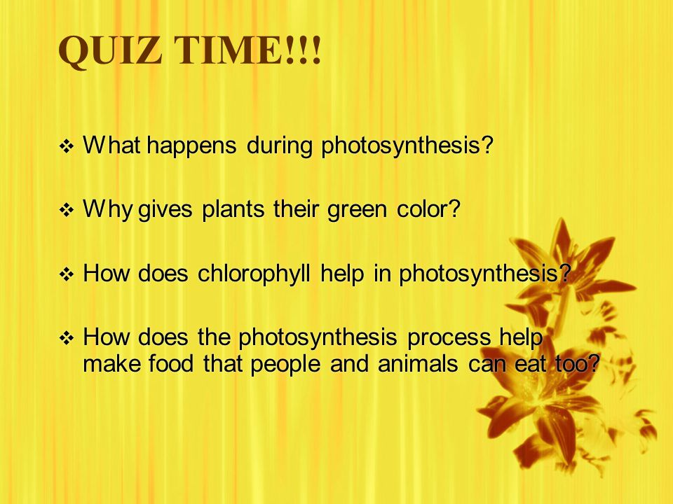 QUIZ TIME!!!  What happens during photosynthesis?  Why gives plants their green color?  How does chlorophyll help in photosynthesis?  How does the