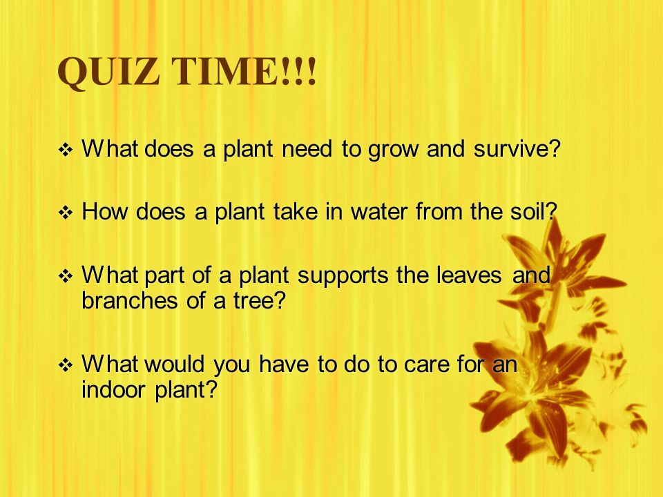 QUIZ TIME!!!  What does a plant need to grow and survive?  How does a plant take in water from the soil?  What part of a plant supports the leaves