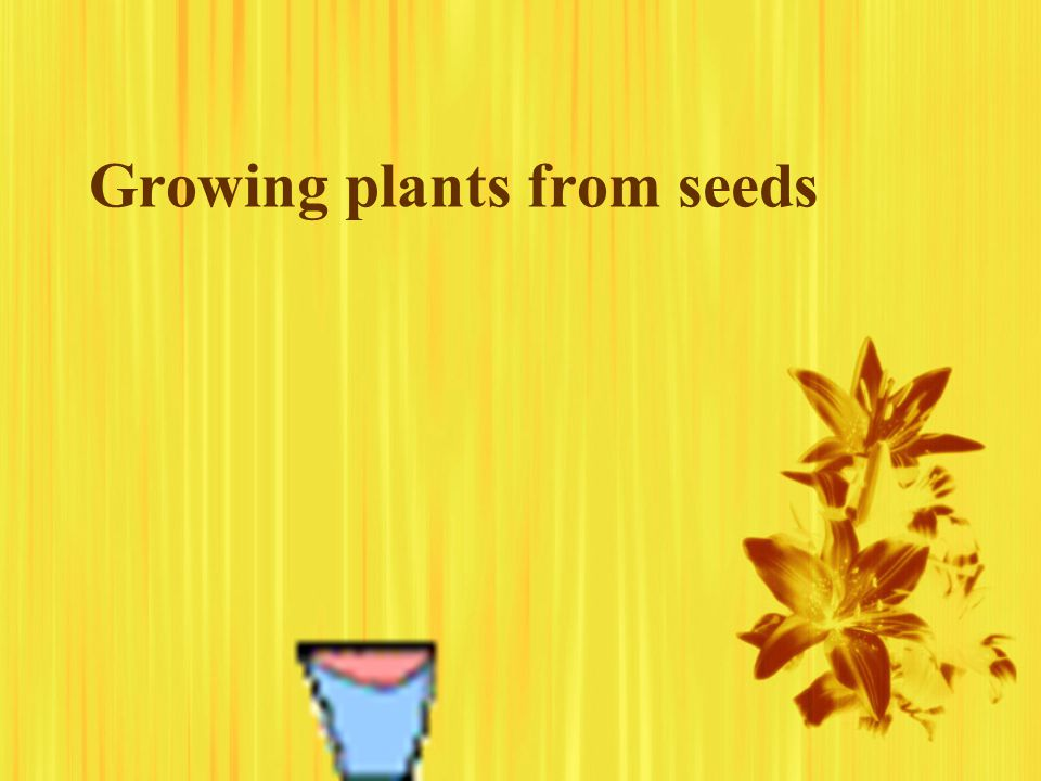 Growing plants from seeds