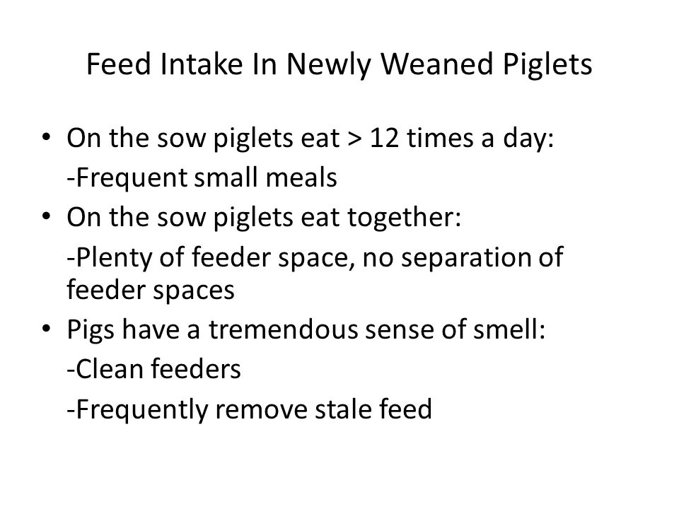 Feed Intake In Newly Weaned Piglets On the sow piglets eat > 12 times a day: -Frequent small meals On the sow piglets eat together: -Plenty of feeder space, no separation of feeder spaces Pigs have a tremendous sense of smell: -Clean feeders -Frequently remove stale feed