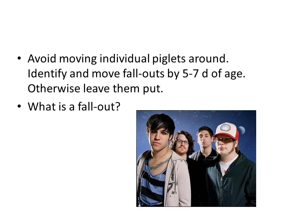Avoid moving individual piglets around. Identify and move fall-outs by 5-7 d of age. Otherwise leave them put. What is a fall-out?