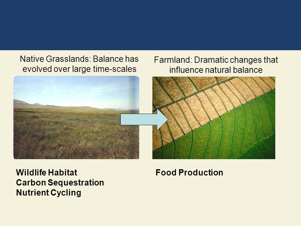 Wildlife Habitat Carbon Sequestration Nutrient Cycling Native Grasslands: Balance has evolved over large time-scales Farmland: Dramatic changes that i