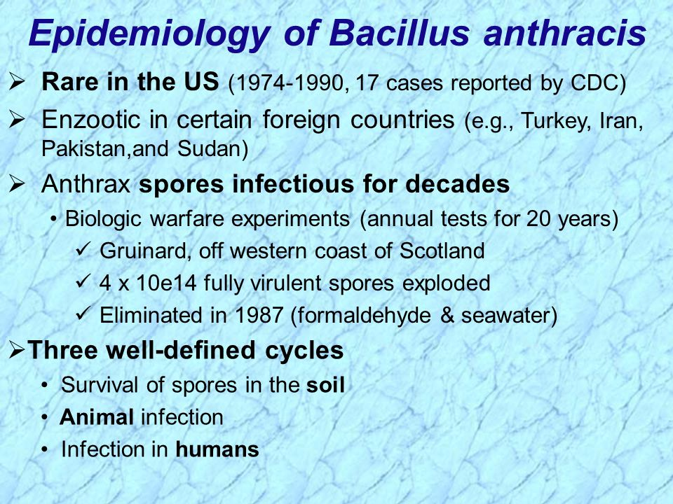 Epidemiology of Bacillus anthracis  Rare in the US (1974-1990, 17 cases reported by CDC)  Enzootic in certain foreign countries (e.g., Turkey, Iran, Pakistan,and Sudan)  Anthrax spores infectious for decades Biologic warfare experiments (annual tests for 20 years) Gruinard, off western coast of Scotland 4 x 10e14 fully virulent spores exploded Eliminated in 1987 (formaldehyde & seawater)  Three well-defined cycles Survival of spores in the soil Animal infection Infection in humans