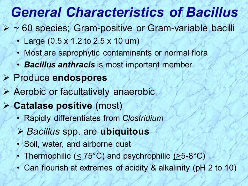 ~ 60 species; Gram-positive or Gram-variable bacilli Large (0.5 x 1.2 to 2.5 x 10 um) Most are saprophytic contaminants or normal flora Bacillus anthracis is most important member  Produce endospores  Aerobic or facultatively anaerobic  Catalase positive (most) Rapidly differentiates from Clostridium  Bacillus spp.