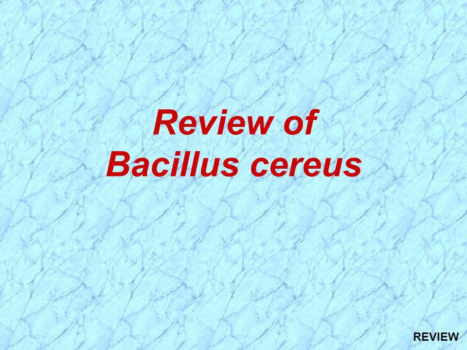 Review of Bacillus cereus REVIEW