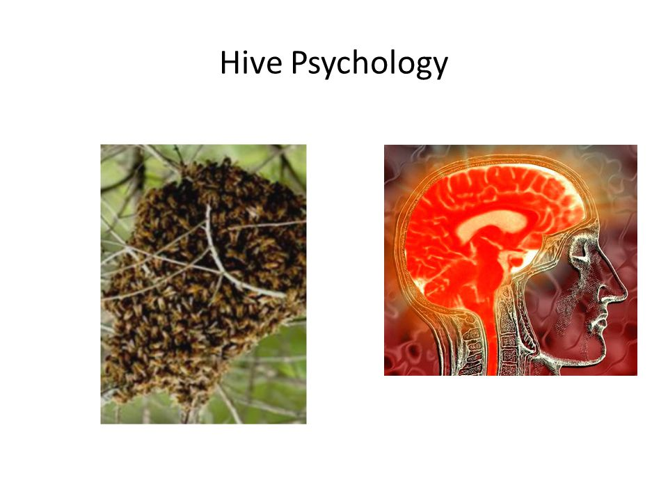 Hive Psychology