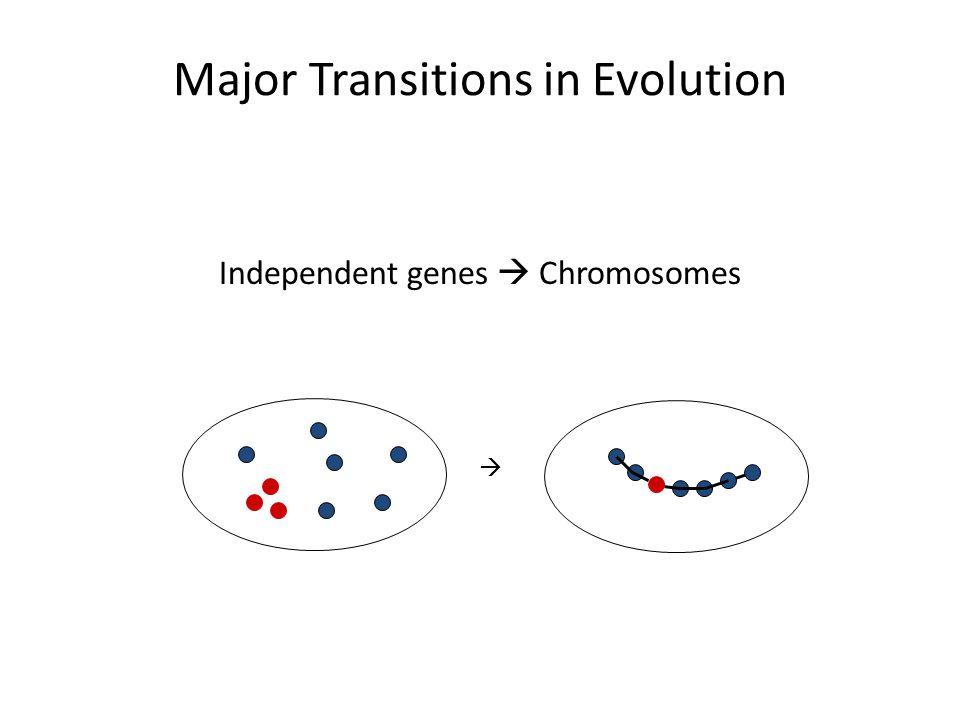 Major Transitions in Evolution Independent genes  Chromosomes 