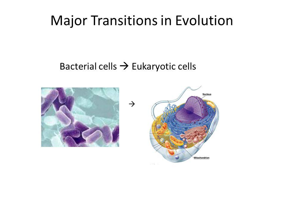 Major Transitions in Evolution Bacterial cells  Eukaryotic cells 