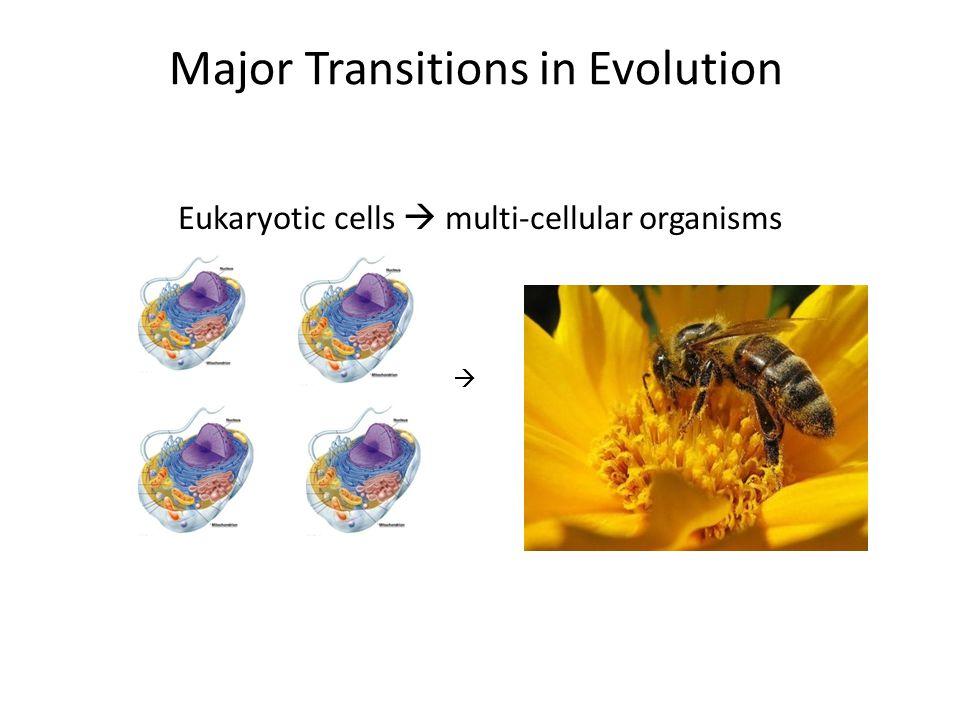 Major Transitions in Evolution Eukaryotic cells  multi-cellular organisms 