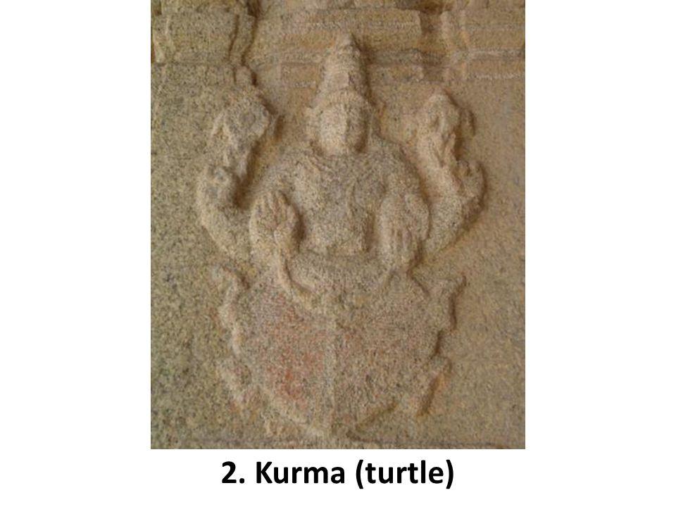 2. Kurma (turtle)