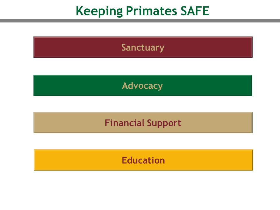 Sanctuary Advocacy Financial Support Education Keeping Primates SAFE