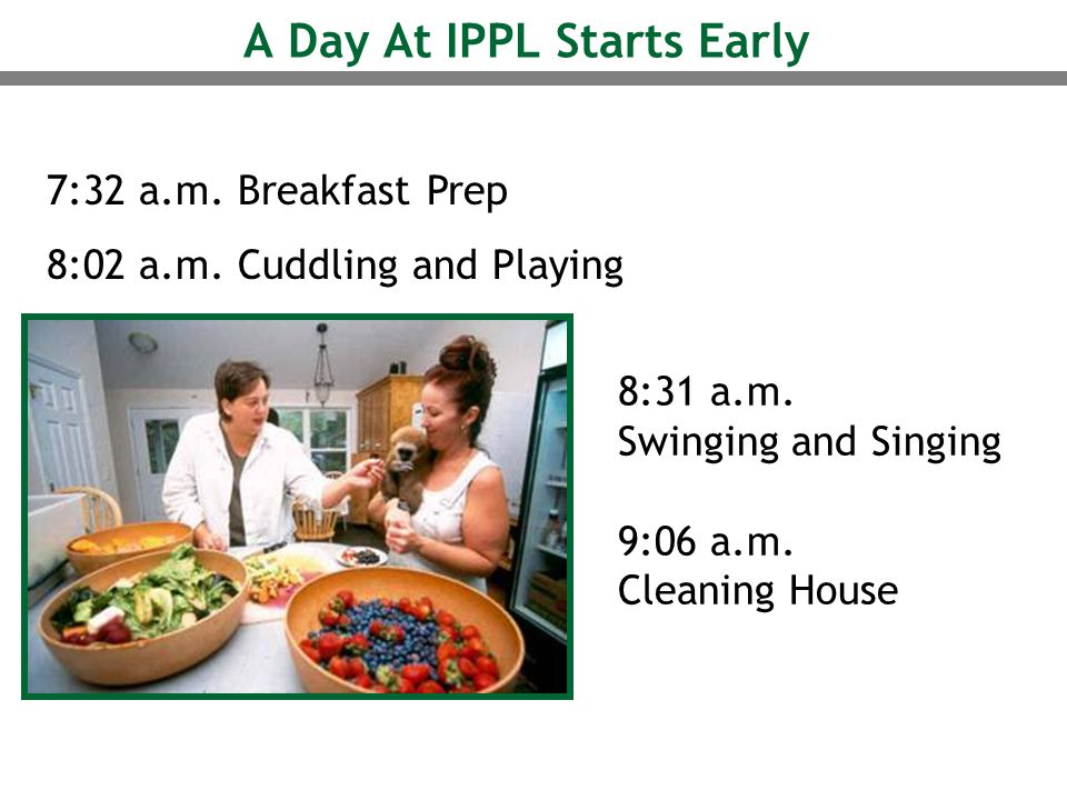 A Day At IPPL Starts Early 7:32 a.m. Breakfast Prep 8:02 a.m. Cuddling and Playing 8:31 a.m. Swinging and Singing 9:06 a.m. Cleaning House
