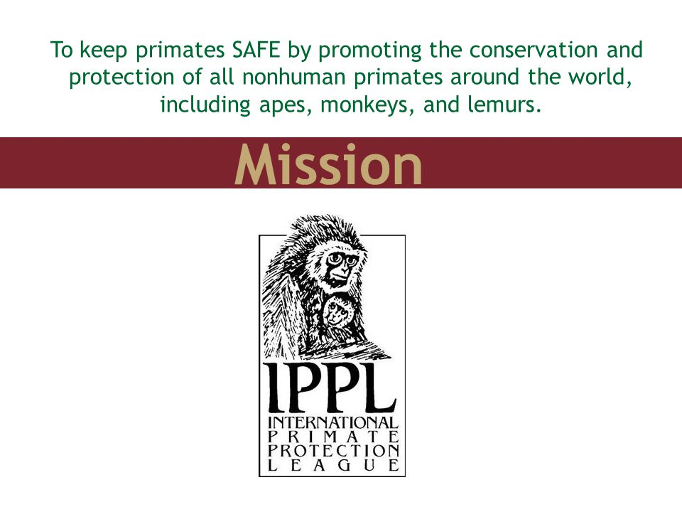 Mission To keep primates SAFE by promoting the conservation and protection of all nonhuman primates around the world, including apes, monkeys, and lem