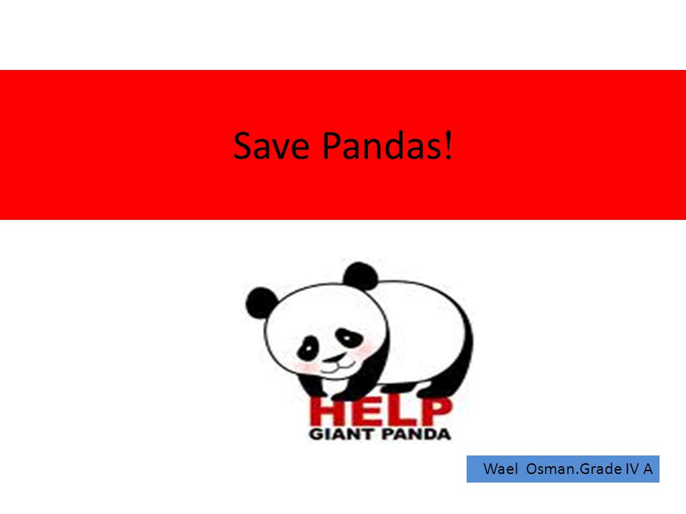 !Save Pandas Wael Osman.Grade IV A
