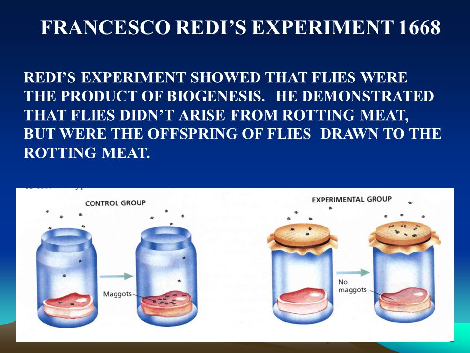 FRANCESCO REDI'S EXPERIMENT 1668 REDI'S EXPERIMENT SHOWED THAT FLIES WERE THE PRODUCT OF BIOGENESIS. HE DEMONSTRATED THAT FLIES DIDN'T ARISE FROM ROTT