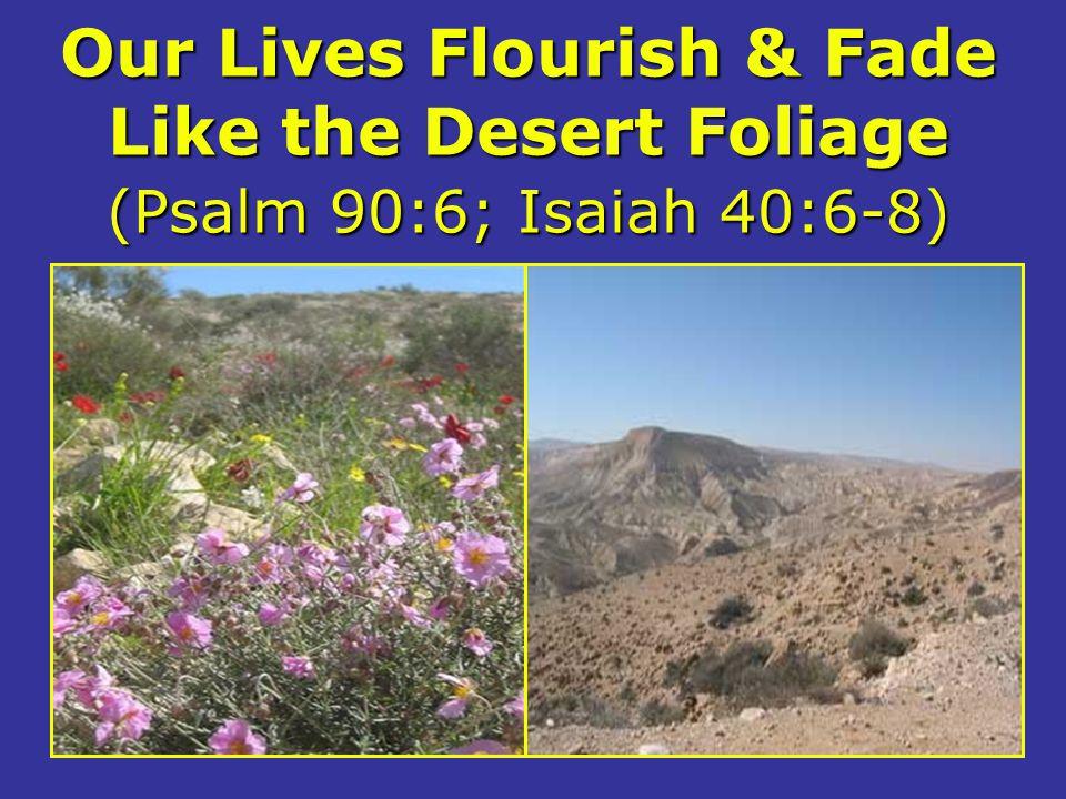 Our Lives Flourish & Fade Like the Desert Foliage (Psalm 90:6; Isaiah 40:6-8)