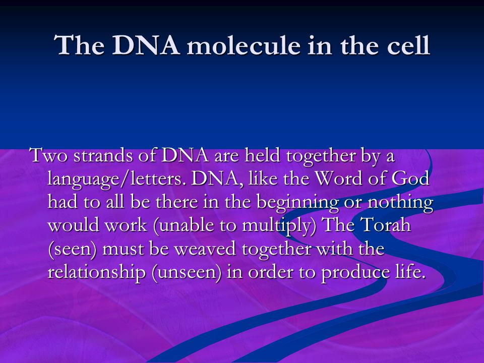 The DNA molecule in the cell Two strands of DNA are held together by a language/letters. DNA, like the Word of God had to all be there in the beginnin
