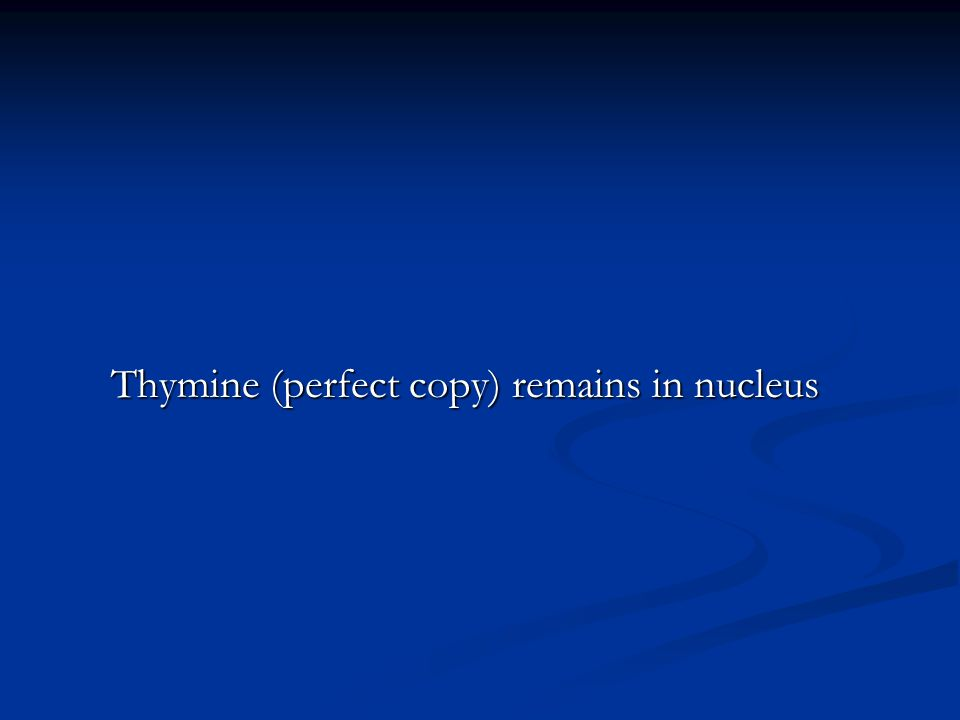 Thymine (perfect copy) remains in nucleus Thymine (perfect copy) remains in nucleus