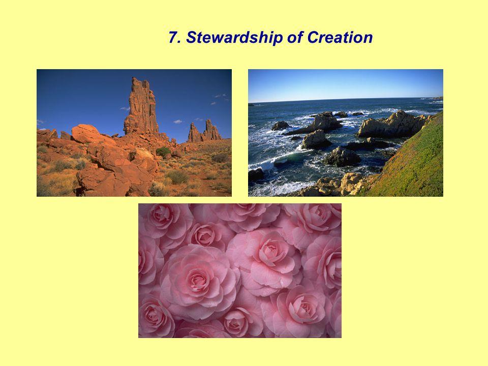 7. Stewardship of Creation
