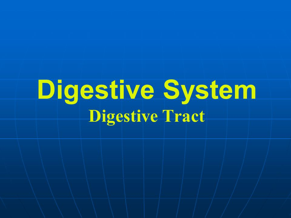Digestive System Digestive Tract